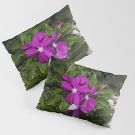 Magentas 2 Pillow Sham