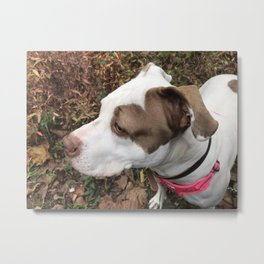 Don't Bully my Breed Metal Print