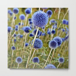 BLUE WILD THISTLE Metal Print