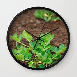 Peanut plants Wall Clock
