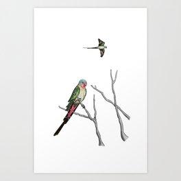 Princess Parrot Art Print