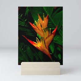 Hawaiian Heliconia at First Light Mini Art Print