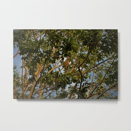 First of the Forest Metal Print