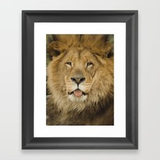 Face of a Lion Framed Art Print