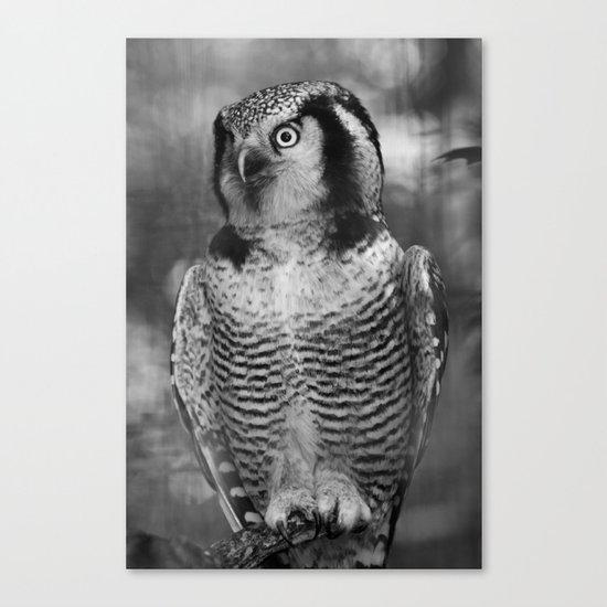 Owl series no.3 Canvas Print