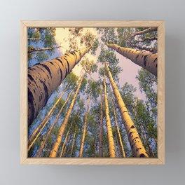 Aspen Trees Against Sky Framed Mini Art Print