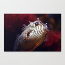 cowfish Canvas Print