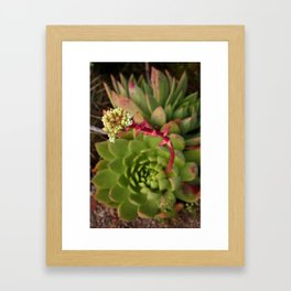 Baja: Succulent Framed Art Print