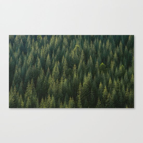 Evergreen #woods Canvas Print