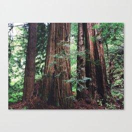 Muir Woods, San Francisco Canvas Print