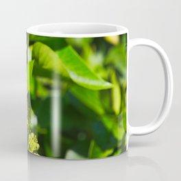 A Bee Gathering Pollen On English Ivy Coffee Mug