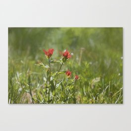 Indian Paintbrush Painterly Canvas Print