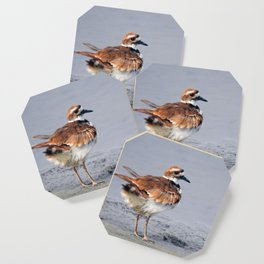 Juvenile Killdeer Coaster