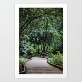 Moody Forest Trail . Adventure Nature Photography . Muir Woods, California Art Print