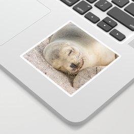 Sleeping sea lion on the beach Sticker