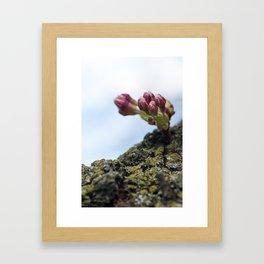 Cherry Blossoms 5 Framed Art Print