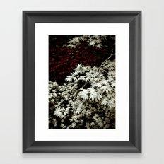 Japanese Maples Framed Art Print