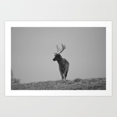 Alone and Free - Deer Photograph Black and white Art Print