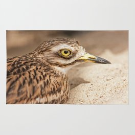 Stone-Curlew Rug