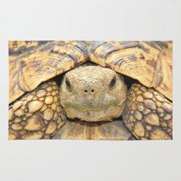 Tortoise Stare Rug