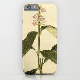 Flower justicia asperula24 iPhone Case