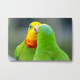 Superb Parrots Arguing Metal Print