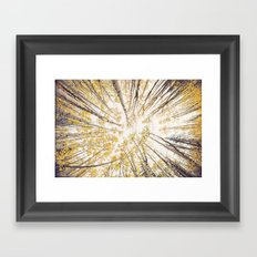 fall looking up Framed Art Print