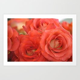 Market Roses at Pike Place Seattle Art Print
