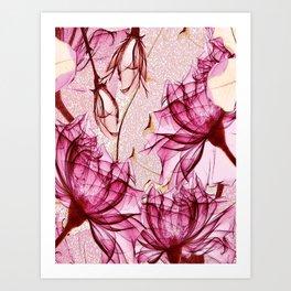 Blush rose red blossom Art Print