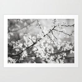 To bloom Art Print