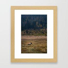 Elk in Rocky Mountain National Park Framed Art Print