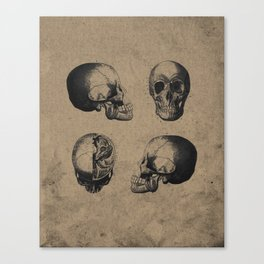 Skull View - Antique Vintage Style Medical Etching Canvas Print