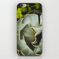 succulent iPhone & iPod Skins featuring Succulent by Olivia Joy StClaire