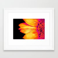 sunflower Framed Art Prints featuring Sunflower Pink Yellow by PureVintageLove