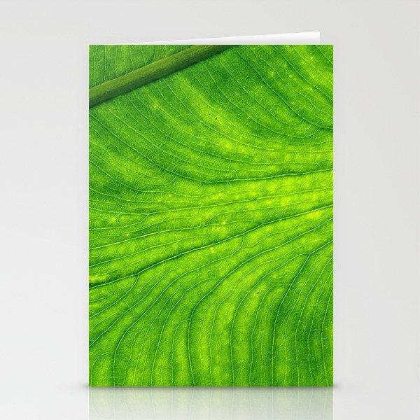 Leaf Paths Stationery Cards