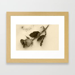 A lone rose resting in the snow Framed Art Print