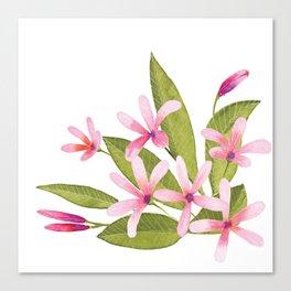 Tropical Pink Plumeria Canvas Print