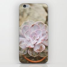 SOLO SUCCULENT  iPhone & iPod Skin