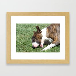 Bull Terrier Framed Art Print