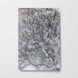 The Tallest Pine Metal Print
