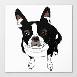 Boston Terrier Cutie Canvas Print