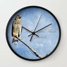 Red-shouldered Hawk, Juvenile Wall Clock