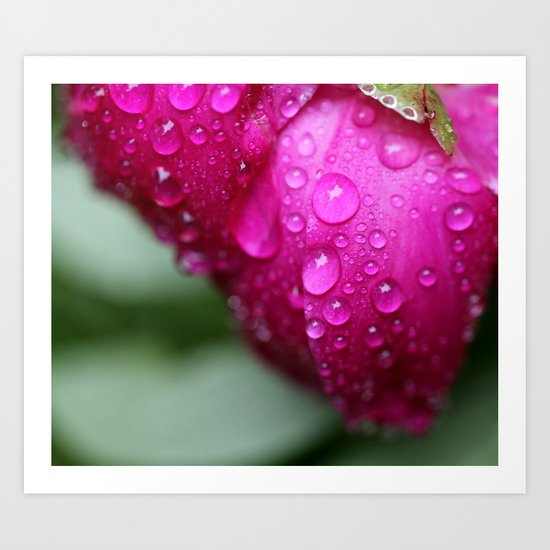 After the Rain in Pink Art Print