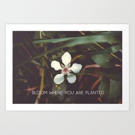 Bloom where you are planted #inspirational Art Print