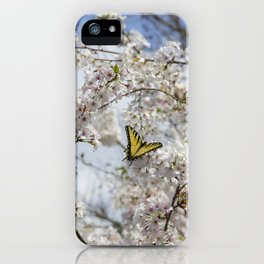 Swallowtail Butterfly in Cherry Blossoms iPhone Case