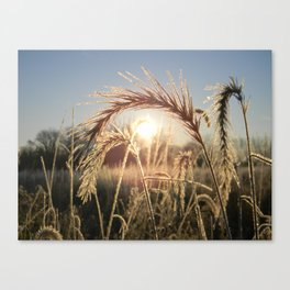 Wheat Sunrise Canvas Print