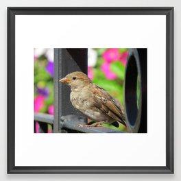 Sparrow Morning Framed Art Print