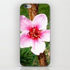 Peach Blossom iPhone & iPod Skin