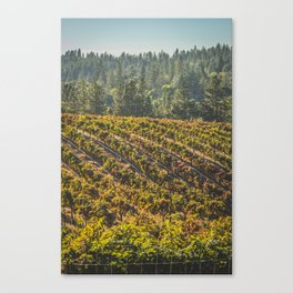 Vineyard in the fall 2 Canvas Print