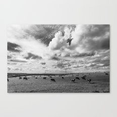 Cows in a field Canvas Print
